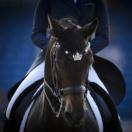 FEI EUROPEAN CHAMPIONSHIPS Aachen 2015. Team Final and Individual Qualifier Dressage Rider.  Inessa MERKULOVA HORSE. Mister X