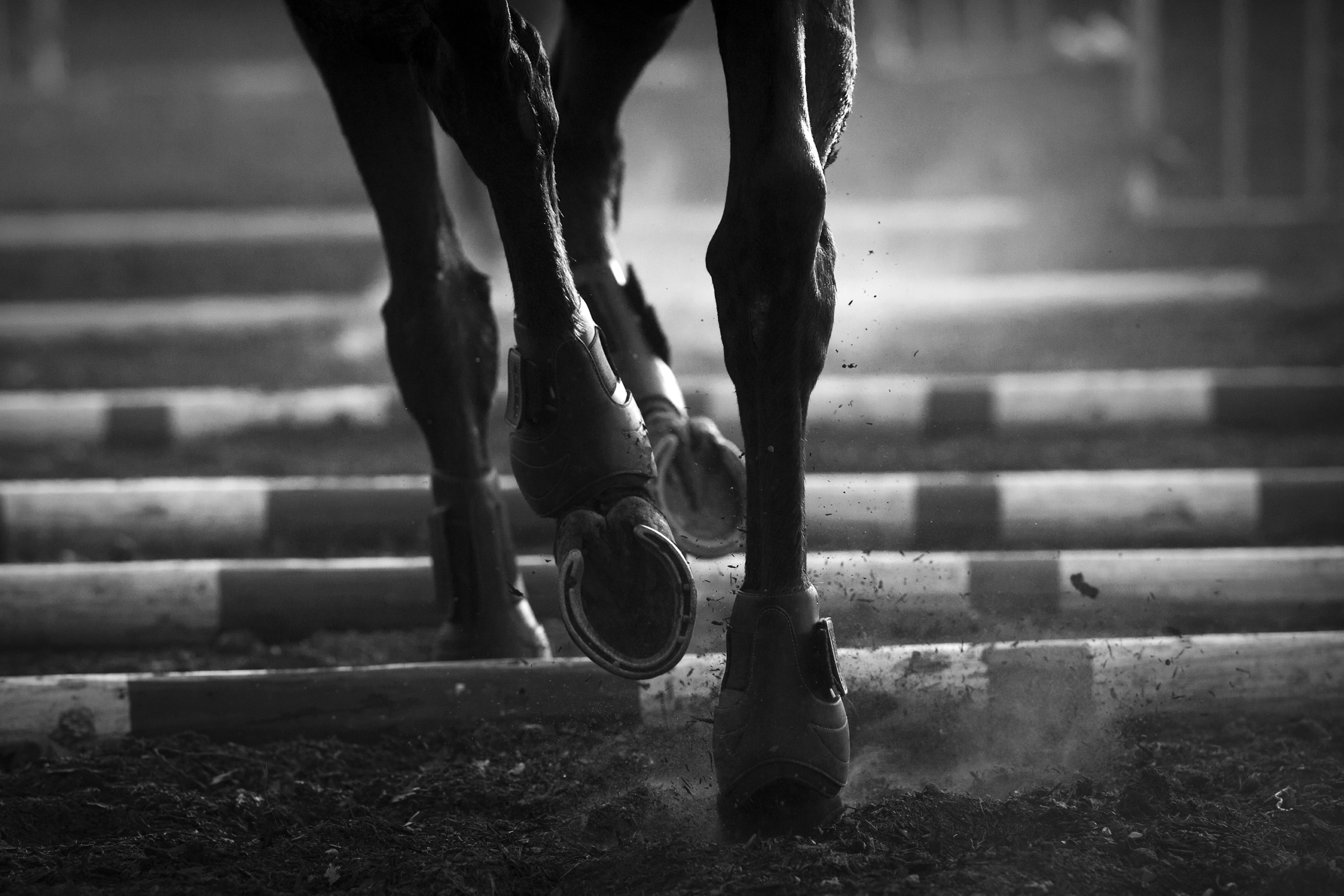 EQUESTRIANCampaign realized for the International Federation for Equestrian Sports FEI.FEI Solidarity Program.Kiara farms Zambia