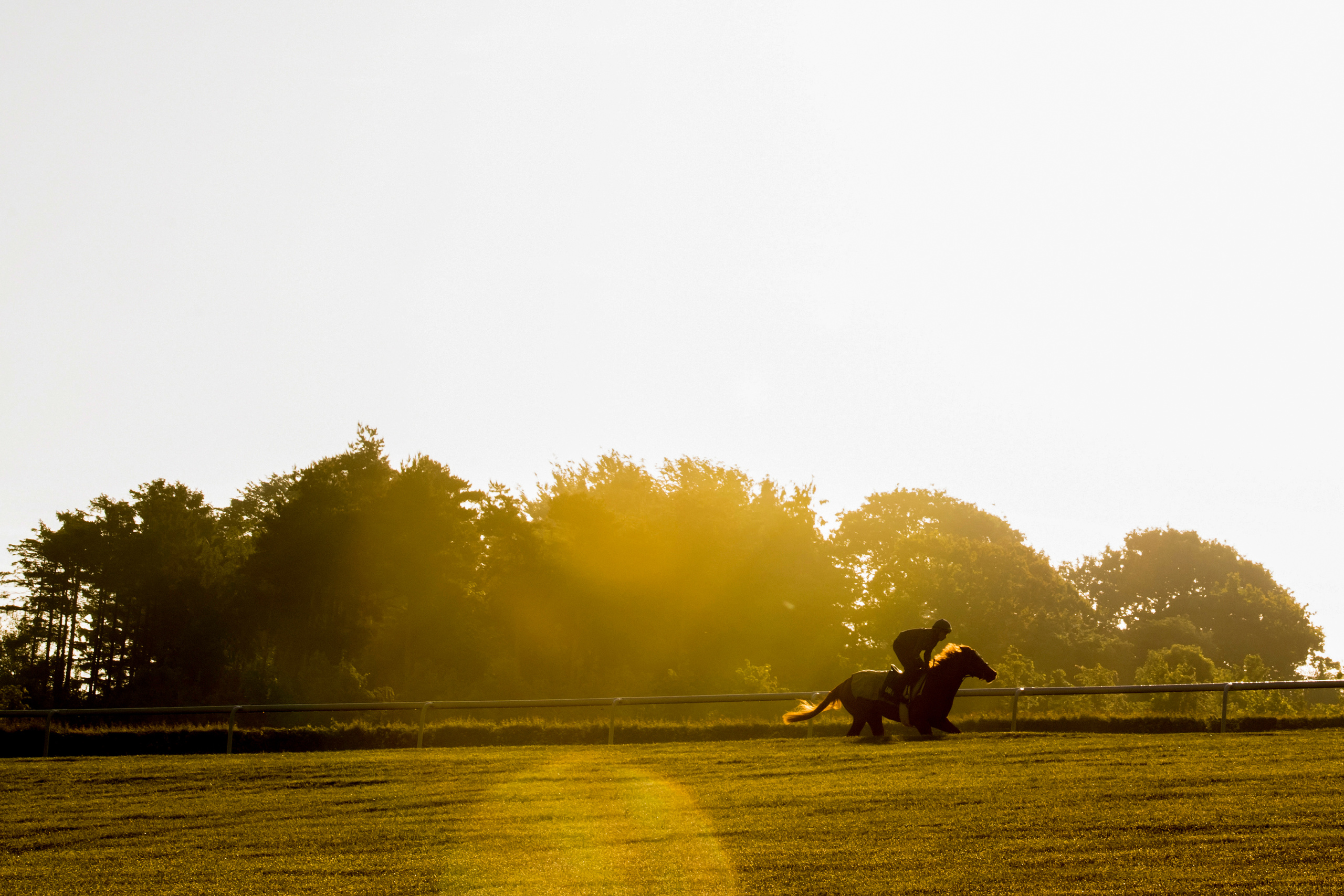 Picture taken for Godolphin.